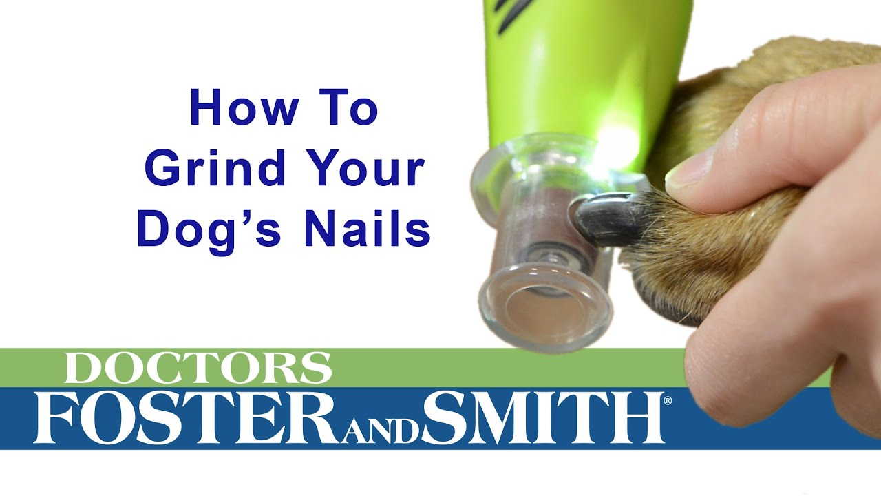 How To Grind A Dog S Nails