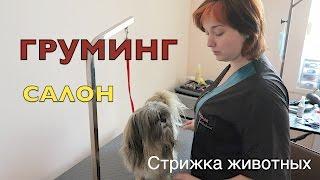 Посещаем груминг-салон в Хмельницком!Лучший салон красоты для животных+ветеринарная клиника.