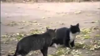 Cat Fight Dog Win!!!! - кошки и собаки - умора)))