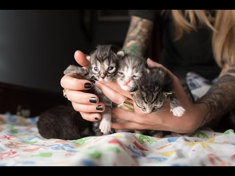 Rescuing Five Neonatal Kittens