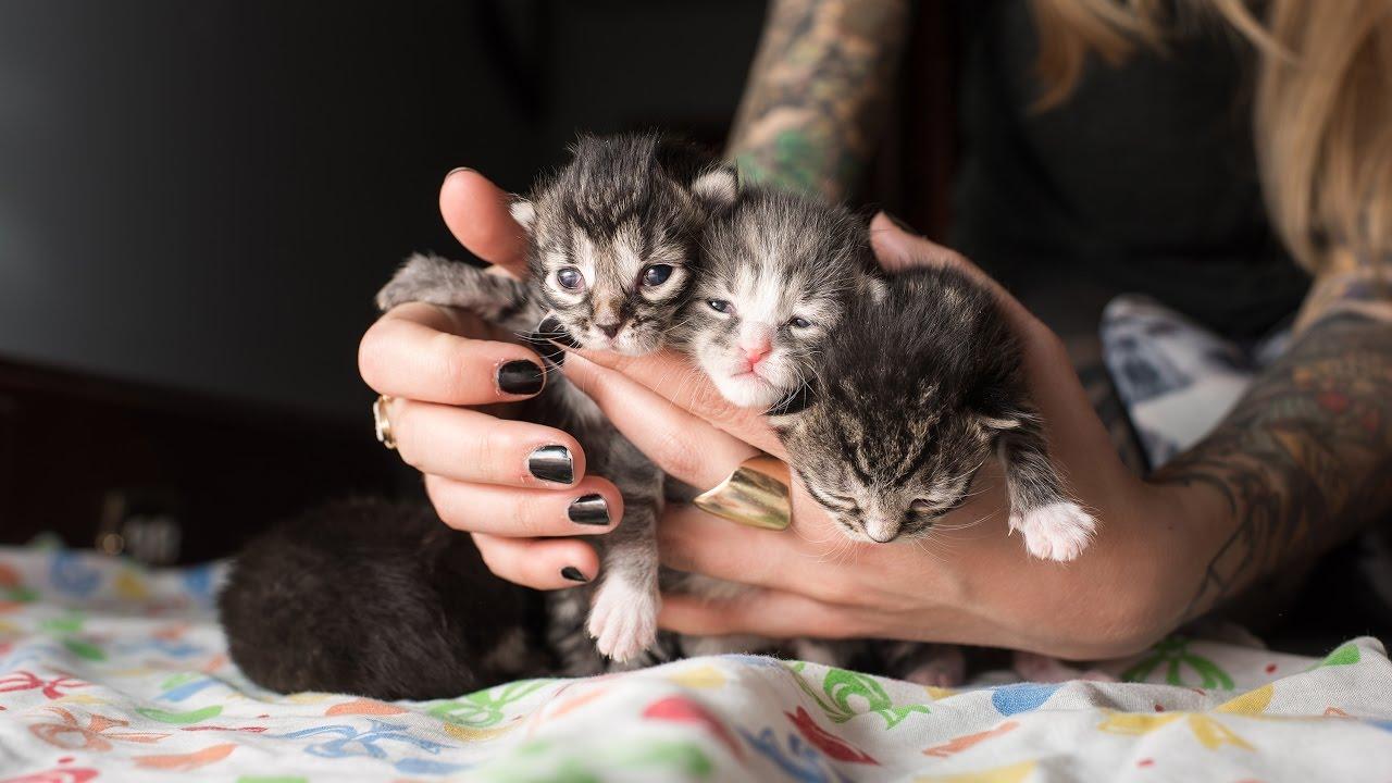 Rescuing Five Neonatal Kittens
