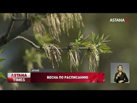 Видео: Весна придет в календарные сроки, - Казгидромет