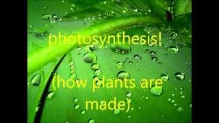 sabrina photosynthesis song