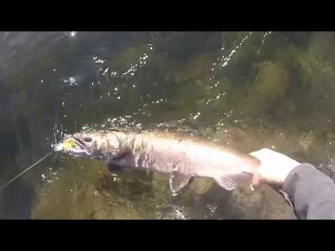 Fishing The Cowlitz River
