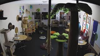 The Cat Cafe live stream on Youtube.com