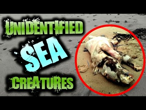 Mysterious UNEXPLAINED Creatures Found on the Beach | SERIOUSLY STRANGE #67