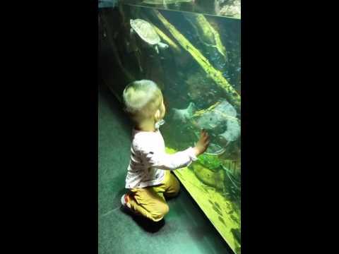 Troy at Aquarium.
