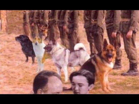 War Dogs (1942) - Full Movie