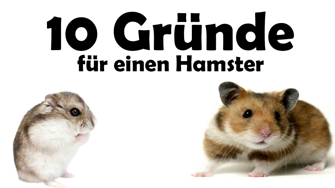 10 gr nde f r einen hamster als haustier youtube. Black Bedroom Furniture Sets. Home Design Ideas