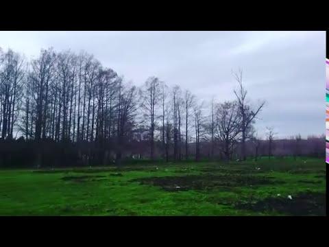 Forêt algérienne El kala