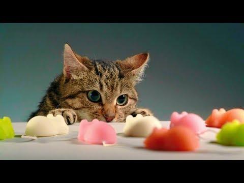 Смешные кошки и собаки Сентябрь 2019 Новые приколы с котами смешные коты 2019 funny cats animals #98
