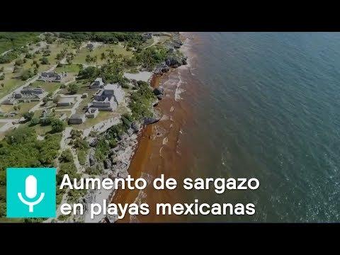 Aumento de sargazo en playas mexicanas, ¿a qué se debe? - Al Aire con Paola