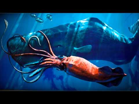 Giant Squid Facts - YouTube