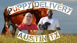Puppy delivery all the way to Austin Texas, Mr Anthony meets his new baby boy