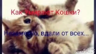 Как Умирают Кошки...|| Очень грустный стих... || #котики || чит. опис. ||