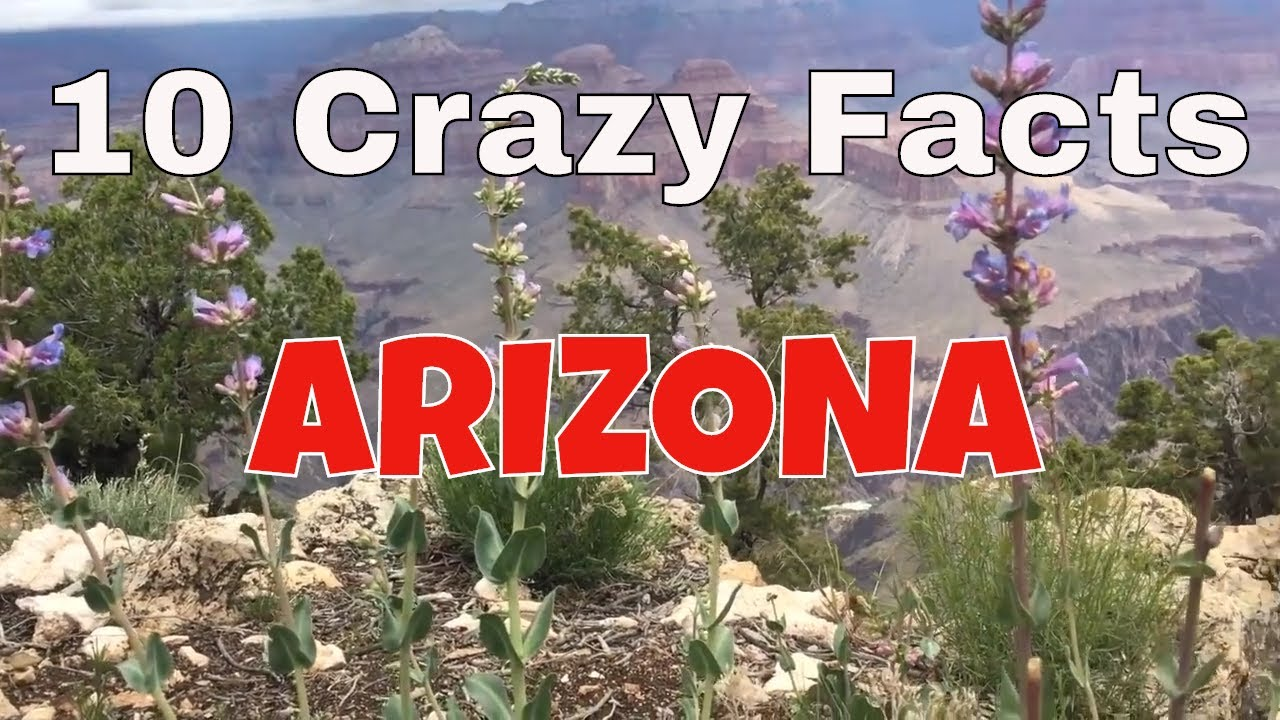10 Crazy Facts About Arizona Youtube