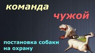 Команда ЧУЖОЙ (постановка  собаки на охрану).