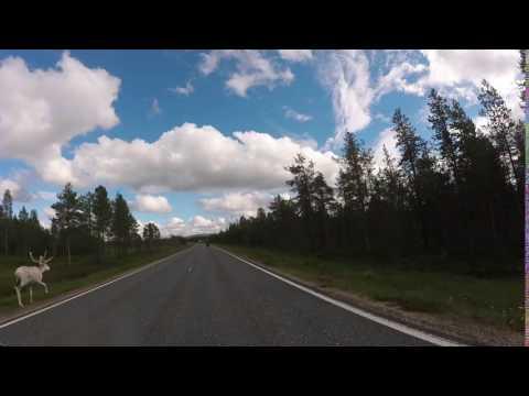 Finlandia renne