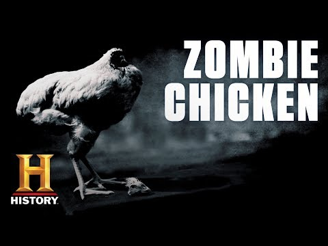 This Chicken Lived for Two Years Without a Head | History
