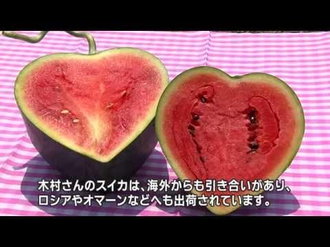 熊本はスイカがうまい県! Kumamoto Prefecture, whose watermelons are the tastiest!