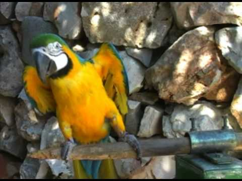 Introduction to Parrot Ownership