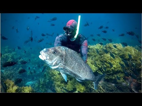 SPEARFISHING ||  New Zealand - Dripping Wet
