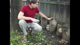 Вешенка на пнях летом.MOV(Летние сорта грибов, в особенности М-5 могут давать урожай даже летом., 2012-10-28T17:07:23.000Z)