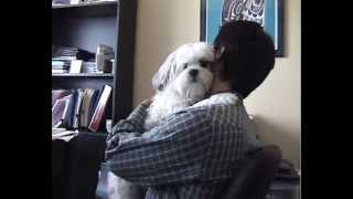 Lhasa Apso Small Dog Roxie Hugs Her Daddy
