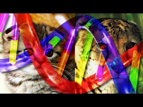 How the Tabby Cat Got Its Stripes