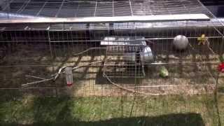 Dymaxion Rabbit Hutch And Run (draft Iteration)
