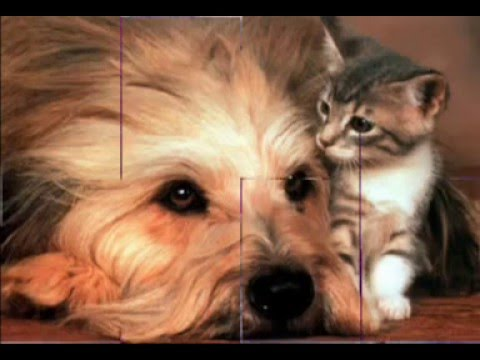 I cani e i gatti piu 39 belli al mondo parte 2 youtube for Youtube cani e gatti