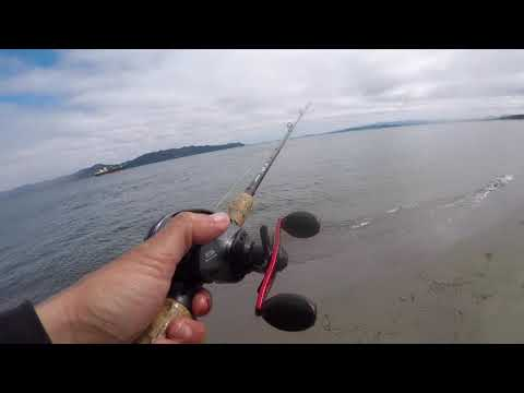 Columbia River Coho Fishing From The Bank | Coho Salmon, Chinook Salmon & Jack Salmon On Spinners