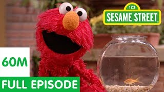 Elmo and Friends Find the Best Pet | Sesame Street Full Episode