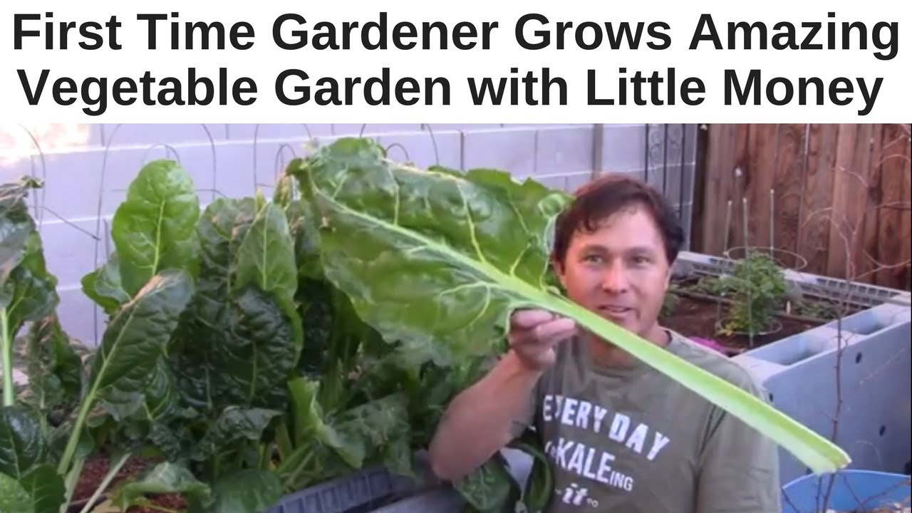 Charmant First Time Gardener Grows Amazing Vegetable Garden With Little Money    YouTube