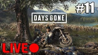 Ending The Rippers  Days Gone  Livestream 11