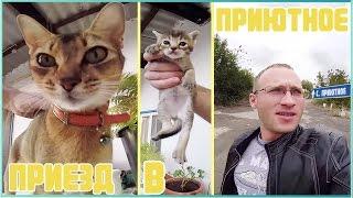 Породистые котята || Прибытие в Приютное