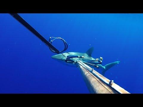 SPEARFISHING GUAM - SHARK ATTACK