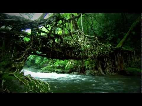 Beautiful Nature with Lovely Song - HD