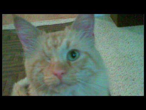 TJ adopts Sweet William kitty