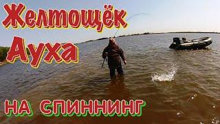 Ауха Желтощек на Амуре на Спиннинг Рыбалка на Амуре