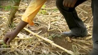 Ulimi wosaononga chilengedwe  (in CheChewa)
