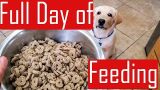 Full Day of Feeding our Labrador Puppy  What My Dog Eats in a Day (Food Chart)