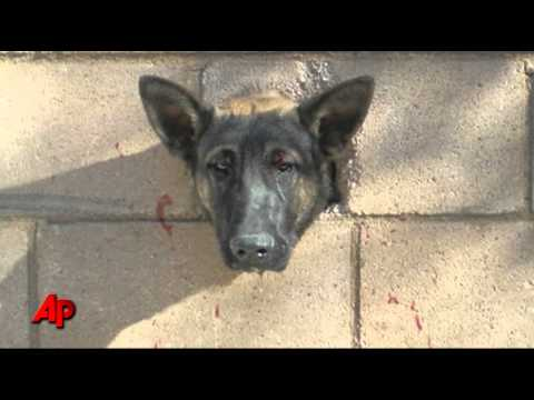 Pet Central - FIREFIGHTERS SAVE DOG WITH ITS HEAD STUCK IN A WALL