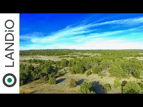 Land For Sale : 8 Wooded Acres in Cibola County, New Mexico