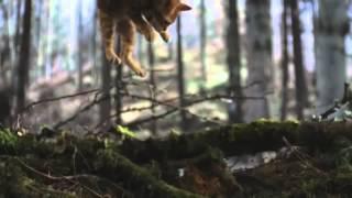 Warrior Cats Online - Commercial