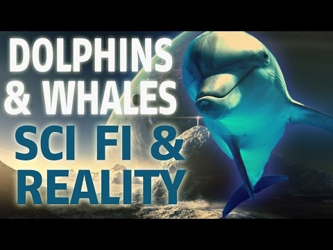 Whales & Dolphins | Sci Fi & Reality ▶️️