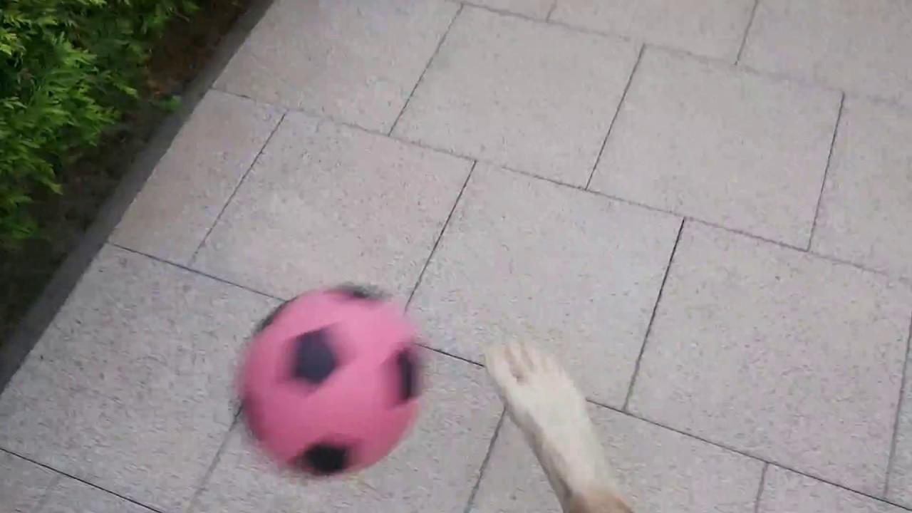 fußball em 2019