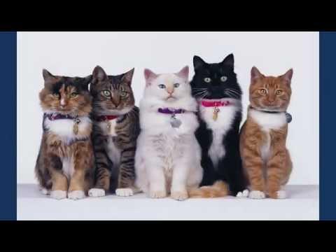Милые котята, картинки котят.