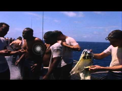 Pollywogs crawling along on their hands and knees on flight deck of USS Enterpris...HD Stock Footage