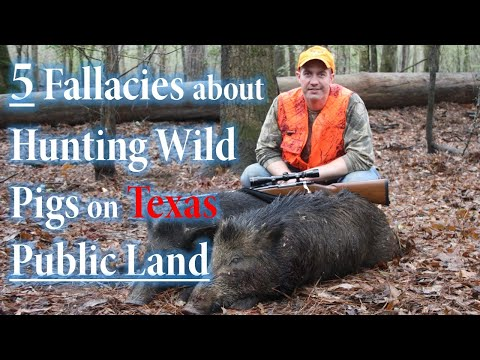 5 Untruths about Hunting Wild Pigs on Texas Public Land
